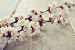 Beautyful blossom branch Royalty Free Stock Images