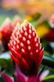 Beautyful Bromeliad flower Stock Photo