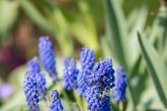 Beautyful e flores colerful da mola em Alemanha Fotos de Stock
