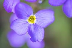 Beautyful e flores colerful da mola em Alemanha Imagem de Stock Royalty Free