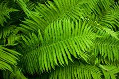 Beautyful fern foliage stock photo