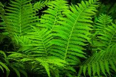 Beautyful fern leaves stock photo