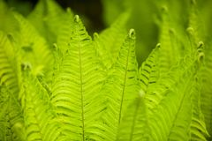 Beautyful ferns leaves green foliage natural floral fern backgro Stock Photography