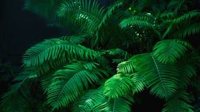 Free Beautyful Ferns Leaves Green Foliage Natural Floral Fern Background In Sunlight Stock Photo - 110827130
