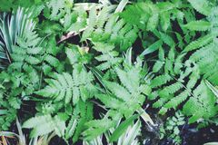 Beautyful ferns leaves green foliage natural floral fern background in sunlight. Stock photo, images and stock photography. Image royalty free stock photo