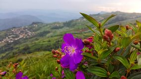 The beautyful flower that grow up on the mountain scenic stock photography