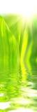 Beautyful Grünblätter Lizenzfreies Stockfoto