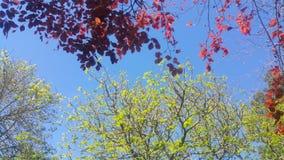 Beautyful himmel i madeiraön Fotografering för Bildbyråer