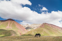 Beautyful-Landschaft: Pferd und Berge Lizenzfreie Stockbilder