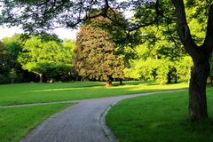 Park 005. A really beautyful lanscape scene with trees in the sun royalty free stock image