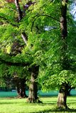 Park 002. A really beautyful lanscape scene with trees in the sun stock photography