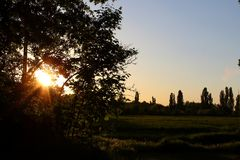 Tree sunset 007. A really beautyful lanscape scene with trees in the sun stock image