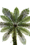 Beautyful leaf of fern Royalty Free Stock Photo