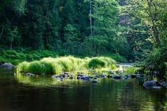 beautyful morgonljus över skogfloden Royaltyfri Fotografi