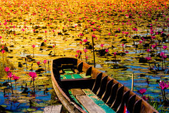 Beautyful Old wooded boat and blossom lotus field or garden Royalty Free Stock Image