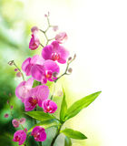 Beautyful orchid and bamboo for border treatment spa Stock Photos