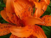 Beautyful pomarańczowy kwiat w Nowy Jork obrazy royalty free