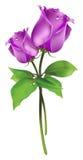 Beautyful rose Stock Photo