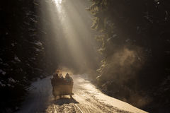 Beautyful sleigh in the winter trough the forest. Beautyful sleigh in the winter trough the forest Stock Image