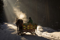 Beautyful sleigh in the winter trough the forest. Stock Images