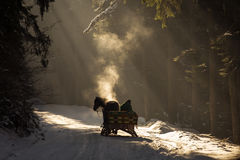 Beautyful sleigh in the winter trough the forest with beautiful background full of rays. Beautyful sleigh in the winter trough the forest with beautiful Stock Image