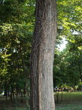 Beautyful tree trunk Royalty Free Stock Photos