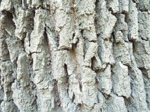 Beautyful tree trunk texture  Royalty Free Stock Image