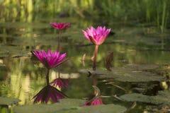 Beautyful tropisk blomma Arkivbild