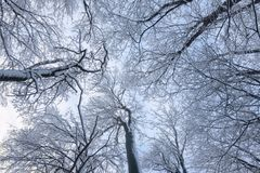 Beautyful winter background with snowy branches. And clear blue sky Royalty Free Stock Images