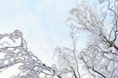 Beautyful-Winterhintergrund mit schneebedeckten Niederlassungen Stockbilder