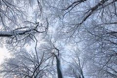 Beautyful-Winterhintergrund mit schneebedeckten Niederlassungen Lizenzfreie Stockbilder