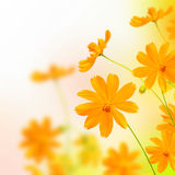 Beautyful yellow flower Stock Image