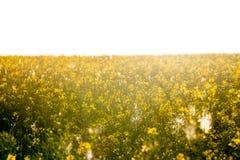 Beautyfulachtergrond in geel tegen de zon voor multidoel stock afbeeldingen