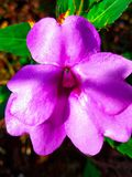 Pink flower. Beautyfull pink flower with macro photography Royalty Free Stock Images