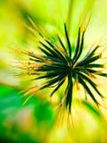 Macro seed. The beautyfull of pure black seed Stock Photos