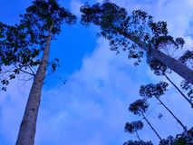 Tree in the blue sky. This is beautyfull views with the trees in the blue sky bacgroaund Stock Photos