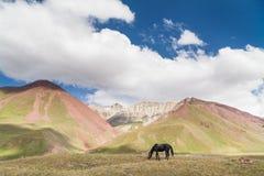 Beautyfullandschap: paard en bergen Royalty-vrije Stock Afbeeldingen