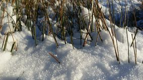 Beautyfulsneeuw en wat gras royalty-vrije stock afbeeldingen