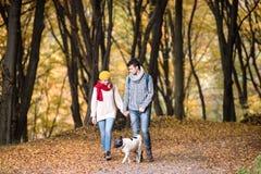 Beaux ajouter au chien marchant dans la forêt d'automne Photographie stock libre de droits