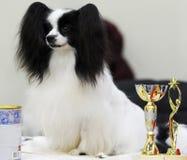 Beaux animaux à l'exposition canine photo libre de droits