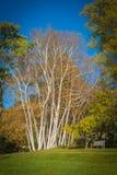Beaux arbres Photographie stock