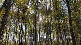 Beaux arbres Images libres de droits