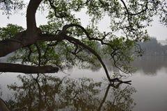Beaux arbres au grand lac célèbre Hoan Kiem à Hanoï, Vietnam, Asie Images libres de droits
