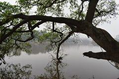 Beaux arbres au grand lac célèbre Hoan Kiem à Hanoï, Vietnam, Asie Photo stock