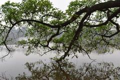 Beaux arbres au grand lac célèbre Hoan Kiem à Hanoï, Vietnam, Asie Photo libre de droits