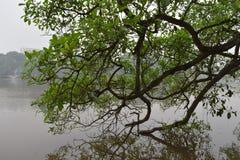 Beaux arbres au grand lac célèbre Hoan Kiem à Hanoï, Vietnam, Asie Photos libres de droits