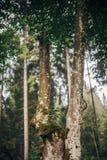 Beaux arbres avec de la mousse sur l'écorce en bois tige d'arbre avec le littl Photos stock