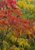 Beaux arbres colorés d'automne Photos stock