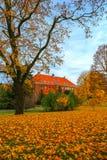 Beaux arbres d'automne Photos stock
