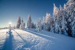 Beaux arbres d'hiver image libre de droits